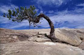 treerock2