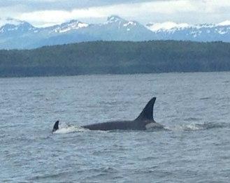whalerustyrhoad